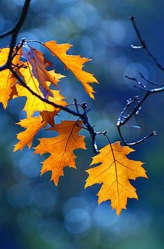 With fall in the air, it's the perfect time to find out the color of your autumn energy!