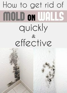 Learn how to get rid of mold on walls quickly and effectively.