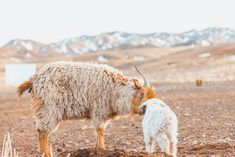 A more pure, authentic, untouched country than Mongolia is difficult to find in a world where no place seems undiscovered. See our Mongolia Gallery. Landscape Photography Tips, Night Photography, Landscape Photos, Travel Photography, Yosemite National Park, National Parks, Quote Aesthetic, Travel Quotes, Beautiful Places