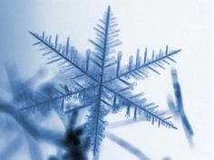 Can't have winter without a snowflake