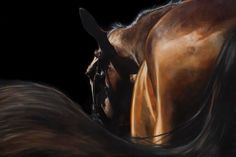 Horse painting 'Swish' oil on linen by Tony O'Connor Equine Art www.ie Image in collaboration with Annie Damhof Photography and Zeelen and Damhof Photography Horse Oil Painting, Horse Paintings, Horse Photos, Equine Art, Horse Art, The Ranch, Beautiful Horses, Lovers Art, Equestrian