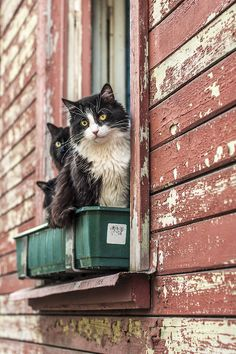 WE THREE ARE THI BUILDING'S SECURITY WATCH ~~~ CATS