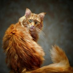 What's your Warrior cat name? Funny Cat Memes, Funny Cats, Funny Animals, Cute Animals, Hilarious, Pet Memes, Animal Memes, Fluffy Cat Breeds, Cat Urine
