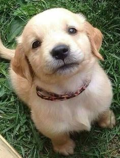 Animals Discover look at this golden retriever puppy AWH Cute Funny Animals Cute Baby Animals Animals And Pets Animals Images Cute Dogs And Puppies I Love Dogs Doggies Baby Dogs Babies With Dogs Cute Baby Dogs, Cute Dogs And Puppies, Doggies, Dog Baby, Baby Twins, Cute Little Animals, Cute Funny Animals, Funny Dogs, Funny Memes