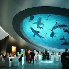 Shark Filled Atrium at Miami
