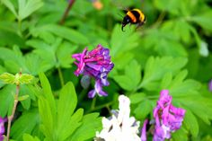 Insects, Bee, Plants, Animals, Honey Bees, Animaux, Bees, Flora, Animal