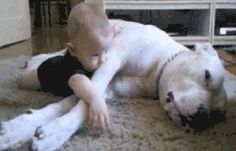 This smooth pooch going in for the hug. | The 31 Most Important Animal Cuddles Of 2013