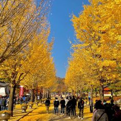 Mungyeong Saejae is a mountain pass in central South Korea. It lies on Joryeong Mountain between the main peak m) and Sinseon Peak m). - Oh i love these autumn vibes 🍁🍂  Mountain Pass, Oh My Love, Top Destinations, Natural Wonders, All Over The World, South Korea, Maine, Dolores Park, Street View