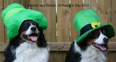 Happy St Pat's Day!!! Warrior and Strider