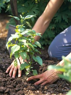 Some Like it Hot: Tips for Planting in a Heat Wave