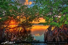 http://captainkimo.com/sunset-through-mangrove-tree-singer-island-florida/