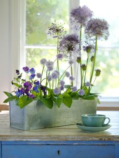 Lovely purples - and the height of this arrangement takes my breath away! Bunch Of Flowers, Blue Flowers, Beautiful Flowers, Allium Flowers, Pansies, Deco Floral, Arte Floral, Ikebana, Indoor Garden