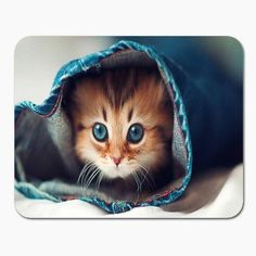 Dozens of Cute Cats and Kittens - I Can Has Cheezburger? and kittens Cute Little Kittens, Cute Cats And Kittens, I Love Cats, Kittens Cutest, Beautiful Kittens, Animals Beautiful, Beautiful Eyes, Pretty Eyes, Animals Amazing