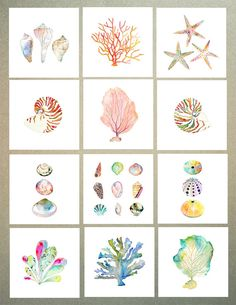 Sea Shell Collezione acquerello stampa. Beach di SnoogsAndWilde