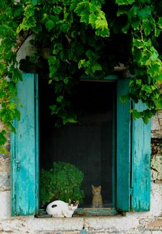 cats in Trachila, by Sylvie
