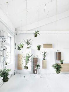 hanging garden /