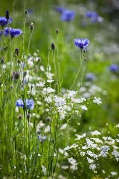 Wildflowers | In the Meadow | Field of Flowers