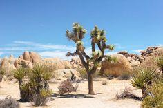 Desert Dreamin' at J
