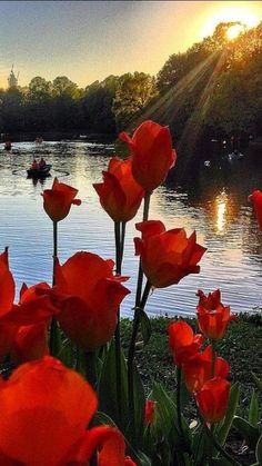 Tulips in the sunset ♥ - My site Beautiful Nature Pictures, Amazing Nature, Nature Photos, Beautiful Landscapes, Beautiful World, Nature Nature, Pretty Pictures, Beautiful Rose Flowers, Beautiful Flowers