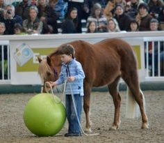 The future of Parelli at the Aintree Horse & Soul Tour stop last weekend!
