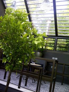 Alteration to residence in Johannesburg, South Africa designed by Charles van Breda Architects Residential Architect, New Construction, South Africa, Plants, Design, Plant, Planets