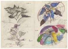 <p>Sunflower, 1980</p> <p>Kreidestift, Filzstft und…