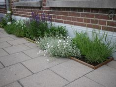 Plant Art, Landscape Architecture, Garden Inspiration, Beautiful Gardens, Gardening Tips, Outdoor Living, Garden Design, Outdoor Structures, Flowers