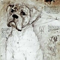 Leonardo's Dogs makes its gorgeous products here in the U.S.! Boxer Study (English) A full size Da Vinci style drawing
