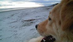 Meet a Lowcountry Dog: Sam