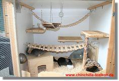 Ida Eddie: pet chinchilla home
