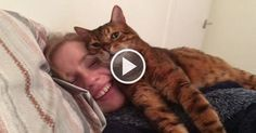 Tonto the Cat REALLY Approves of his Human's New Girlfriend!