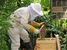 Kein Klogang für Bienen im Wintert: http://www.kuriosetierwelt.de/kein-klogang-fuer-bienen-im-winter/