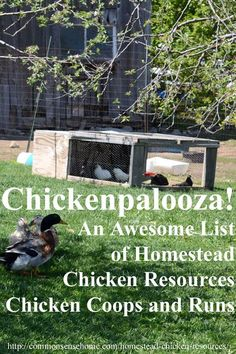 Chickenpalooza!  An Awesome List of Homestead Chicken Resources