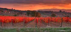 Sunset over vineyards in Montefalco, a town and in the central part of the Italian province of Perugia.