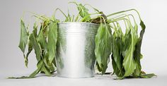 How Not To Kill Plants In Containers (1)
