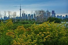 Taking a nature walk in Toronto is an easy task with so many beautiful parks around. And there are options: from beachside spots to dense forests t. Meanwhile In Canada, Toronto Travel, Beautiful Park, Family Day, Walking In Nature, Botanical Gardens, Ontario, New York Skyline, Places To Go