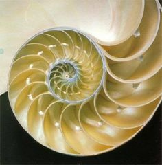 La Geometria Sacra presente in Natura è un riflesso delle Leggi Universali.