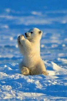 <3 <3  hermoso estos animales les encantan el frio son adorables