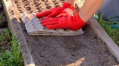 Vegetable Garden, Garden Landscaping, Arm Warmers, Vegetables, Gardening, Landscape, Home, Gardens, Flowers