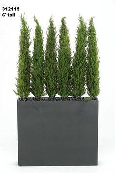 Tall planter, tall plants.