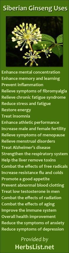 Siberian Ginseng Benefits  -----  Siberian ginseng, also known as Eleuthero, is considered as a normalizer, stress reducer and energizer. It has been traditionally used to negate stress and fatigue. It is often used as a tonic to invigorate a person physically and mentally.