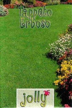 SEMI DI PRATO INGLESE PRATO JOLLY KG. 25 http://www.decariashop.it/semi-di-prato-inglese/15028-semi-di-prato-inglese-prato-jolly-kg-25.html