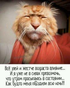 Ideas For Funny Good Morning Memes Cats Funny Good Morning Memes, Funny Quotes For Kids, Love Quotes Funny, Funny Quotes About Life, Funny Captions, Funny Memes, Hilarious, Fun Funny, Funny Relationship Jokes