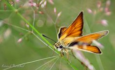 L'été comme les papillons se fait la belle à tire d'ailes.  #papillon #butterfly #ailes #wings #campagne #nature #countryside #orange #creuse #limousin #igersfrance #igerslimousin #ilovecreuse