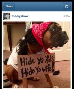 Hide yo wife, hide yo kids pet Halloween costumes DIY