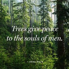 Peace from trees.