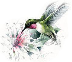 Colibri à gorge rubis aquarelle art animalier par RobManciniImages                                                                                                                                                     Plus