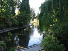 Crystal Springs in Winter Portland Oregon | Things to do in Portland