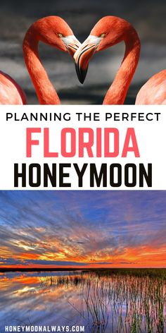 With its pristine beaches and crystal waters, year-long temperate climate, and basis for adventure, Florida is a romantic place to begin your lives together on a honeymoon.  #florida #honeymoon #travel