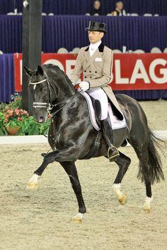 horse Moorland totillas - Recherche Google